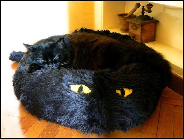 Приколы про черный кот