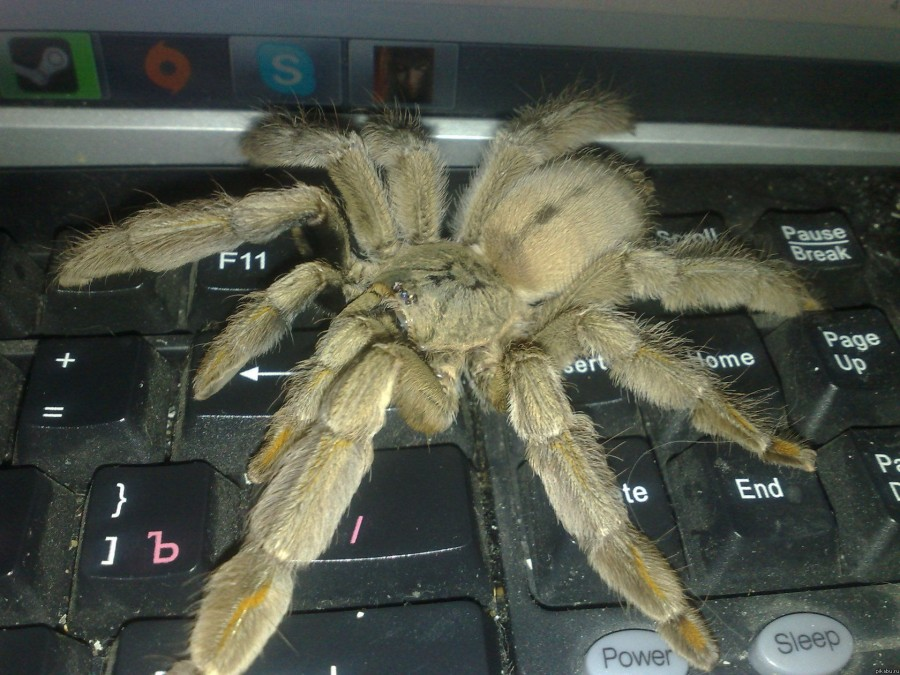 Смешная картинка у тебя паук, поздравление для