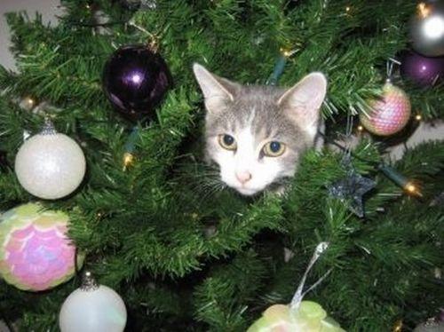 1293172912_doseng.org_cats_20