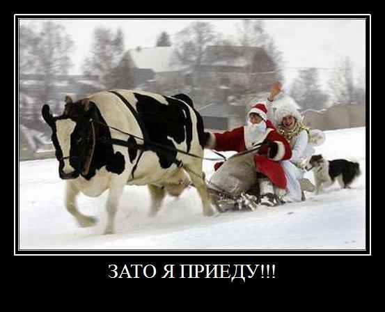 81576817_novogodnie_prikoluy_1jpgnew