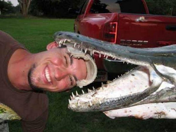 1295446670_alligator_fish_01