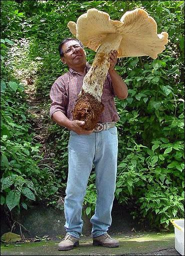 80 Giant Mushroom Man