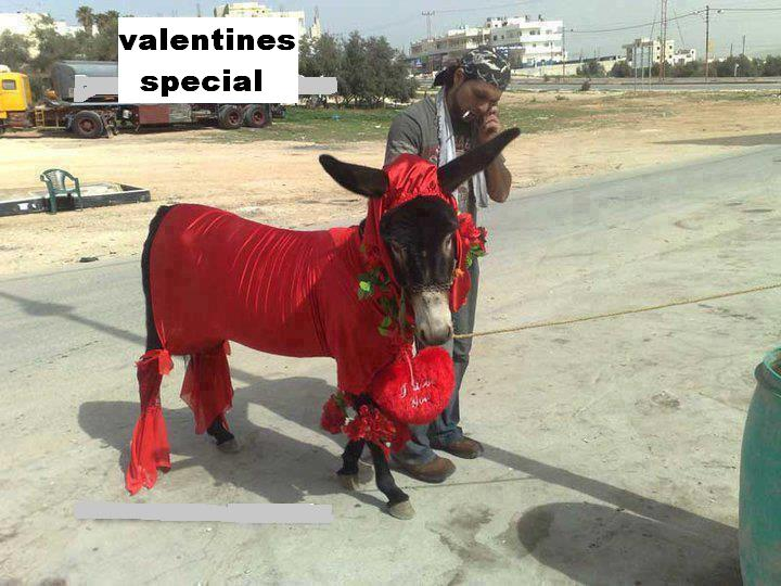 funny-gadha-ghora-for-upcoming-valentines-day-picture80102058_20131205121