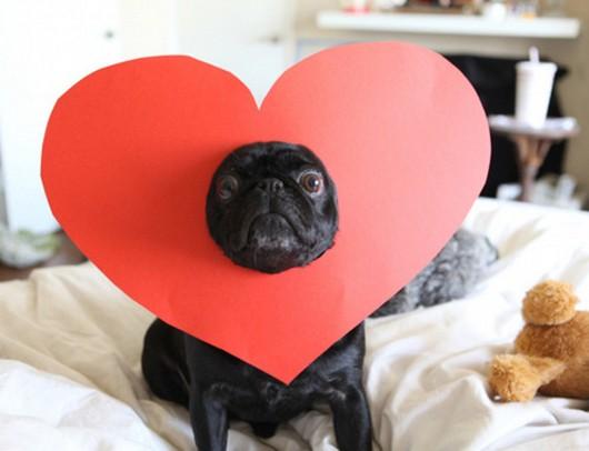 valentines-day-funny-animals-3