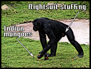flightsuit stuffing