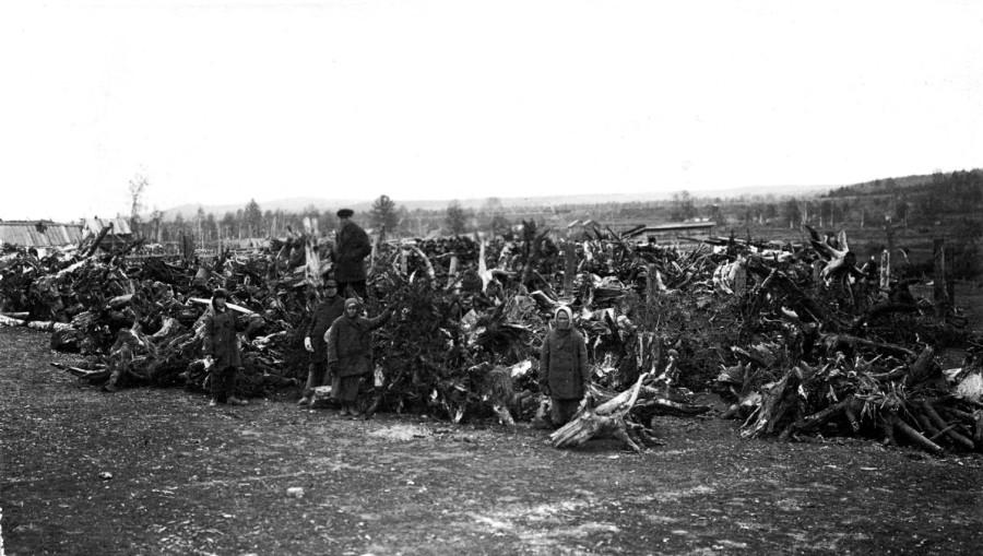 Пни на стройплощадке цеха 1. 1930г