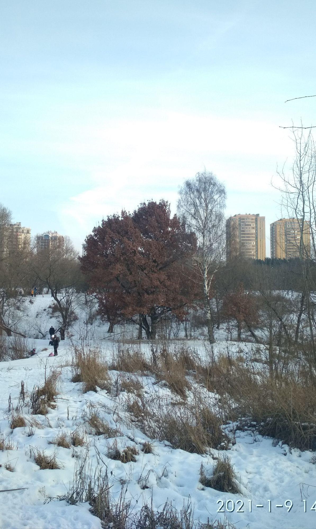 """Оказывается, такое поведение дуба, не сбрасывать листья на зиму, имеет официальное название """"зимний дуб""""Вообще интересно в Википедии: дуб - род деревьев и кустарников семейства буковые.Дуб - это БУК!"""