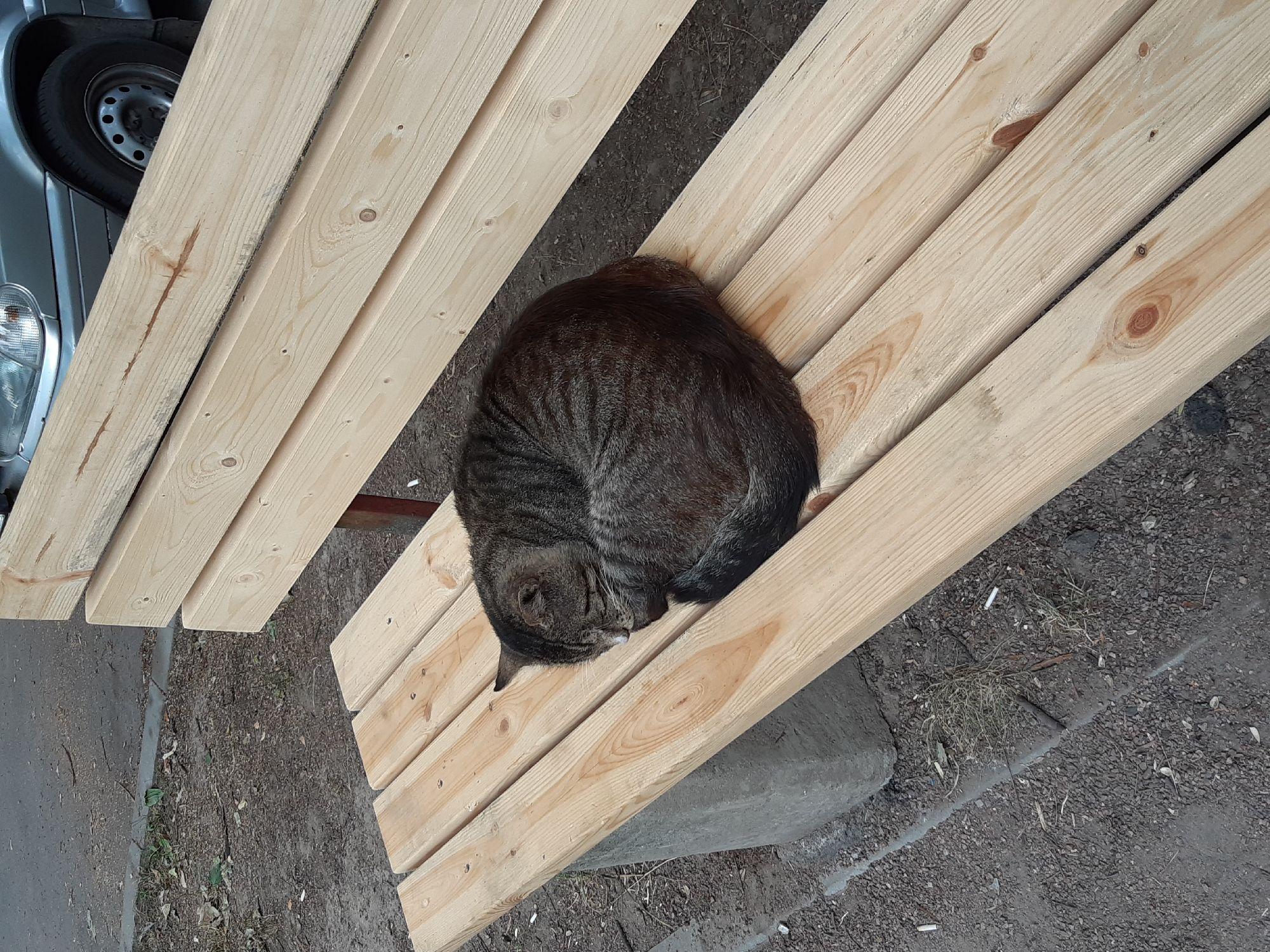 УК вчера починил самую древнюю скамейку нашего двора. Ночью пришел котик-испытатель. Судя по всему ремонт произведен качественно. Пока я вокруг с телефоном прыгала, котик продолжал спать. Значит удобно )
