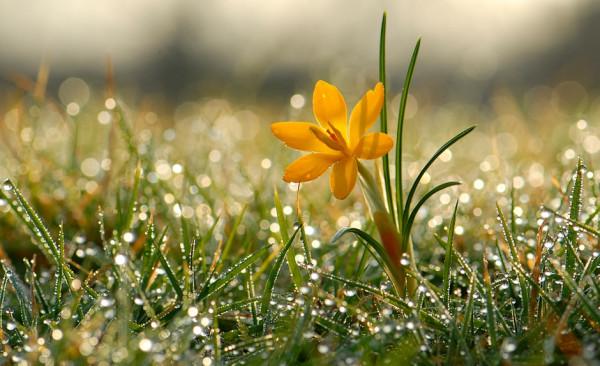 цветок1