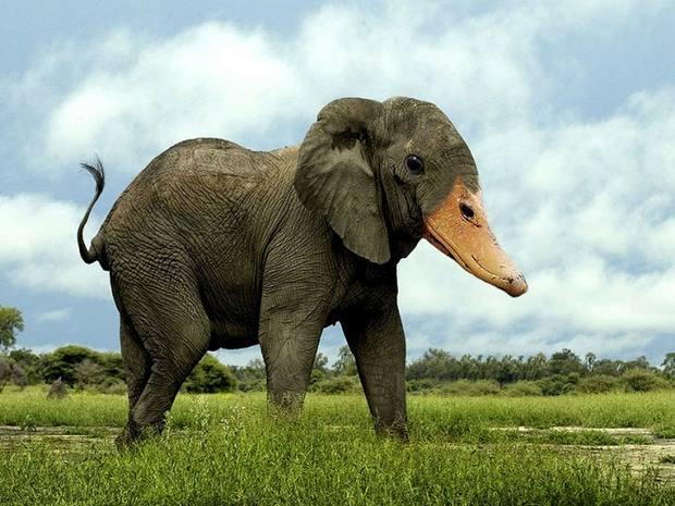 слоноклюв