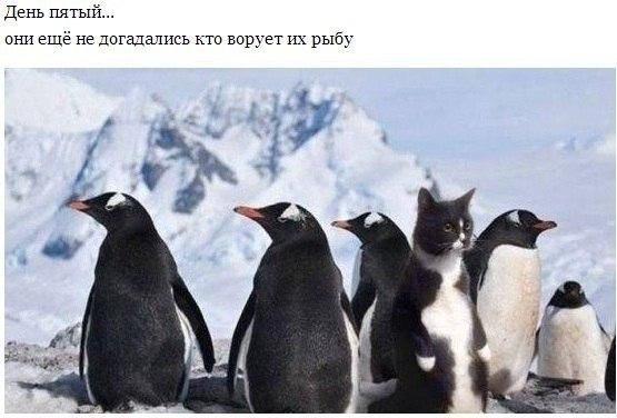 кошак среди пингвинов