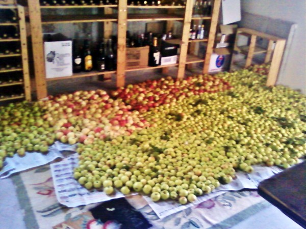Apples (at least four different types) on the floor of the wine cellar!