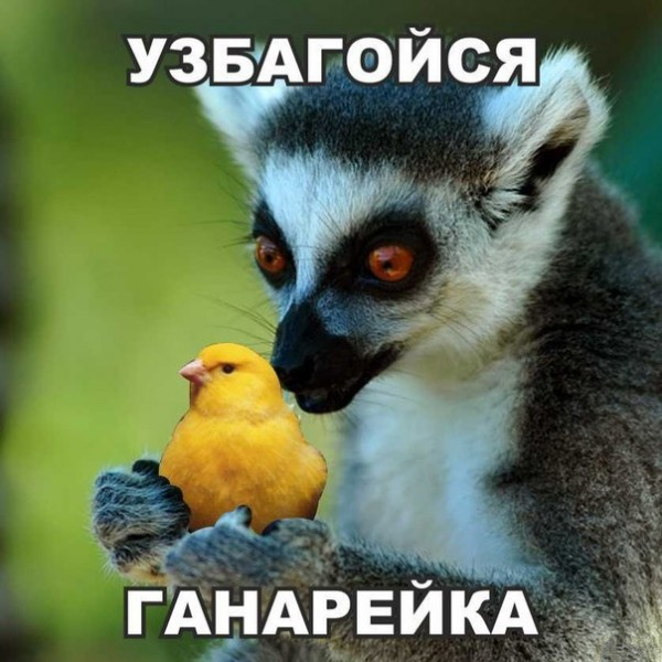 uzbagoysya2