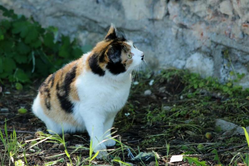 кошка (Севастополь) _10.JPG
