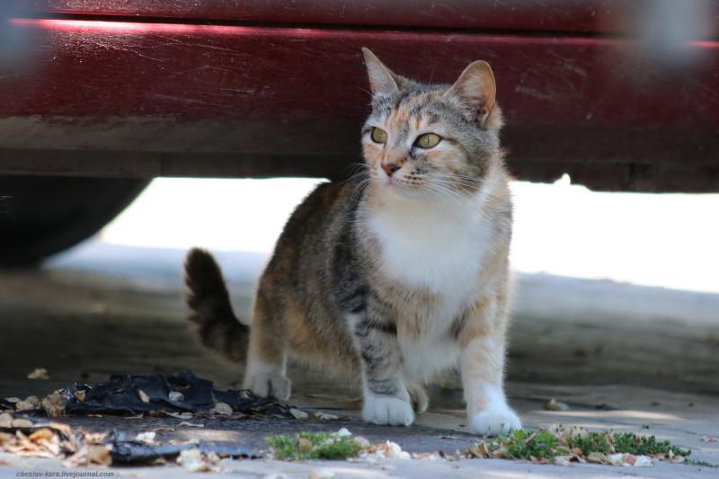 кошка (Севастополь) _40.JPG
