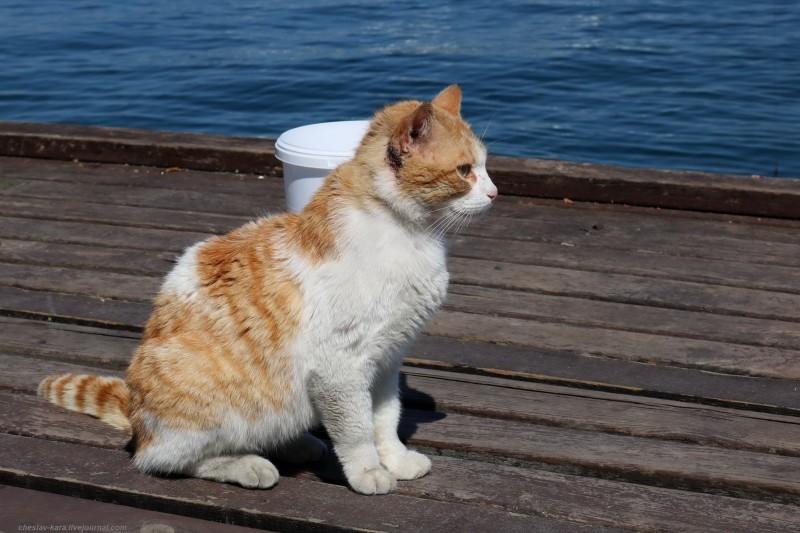 кошка (Севастополь) _52.jpg