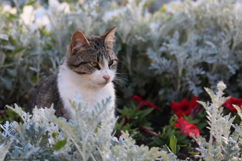 кошка (Севастополь) _110.JPG