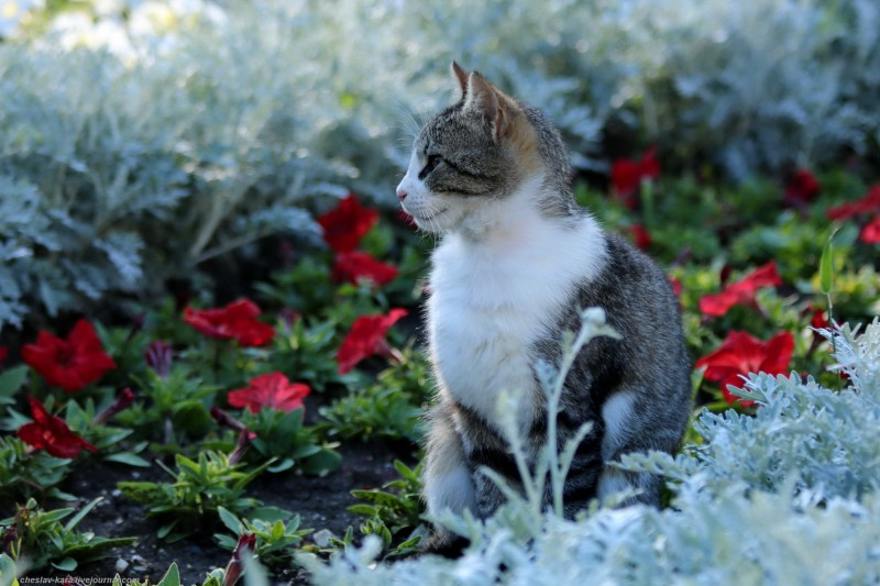кошка (Севастополь) _130.JPG