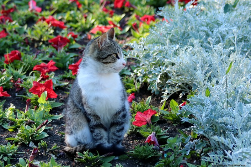 кошка (Севастополь) _142.jpg