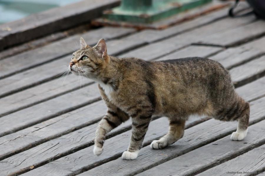 100 кошки Севастополя _280.JPG