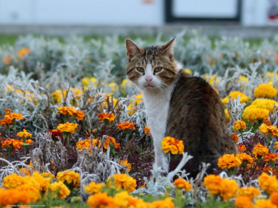 110 кошки Севастополя _140.JPG