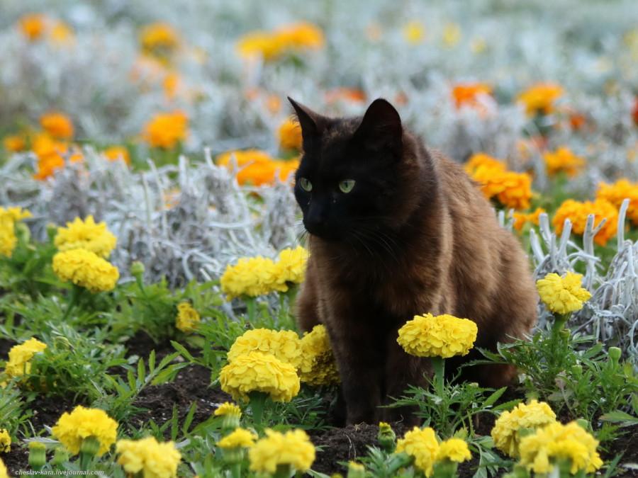150 кошки Севастополя _130.JPG