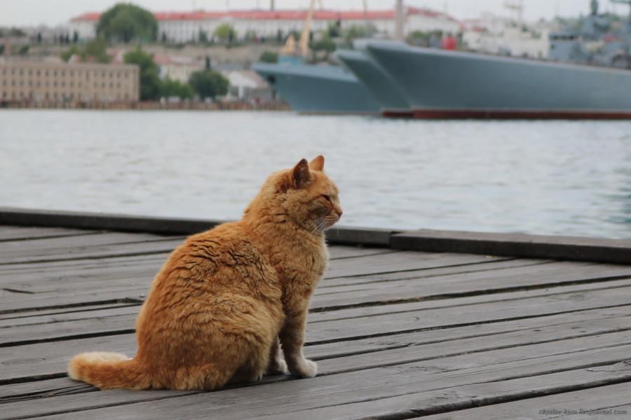 170 кошки Севастополя _250.JPG