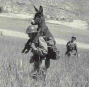 осёл на  солдате