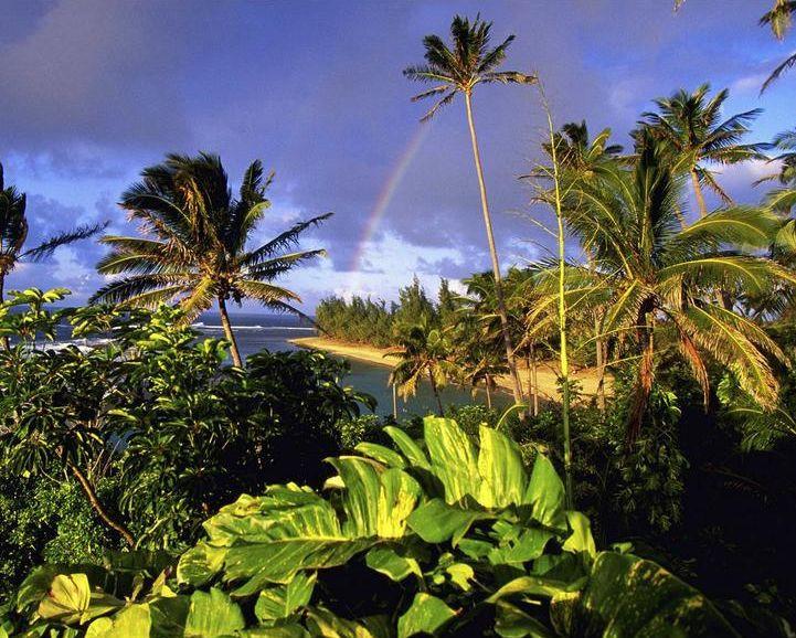 таи-пальмы