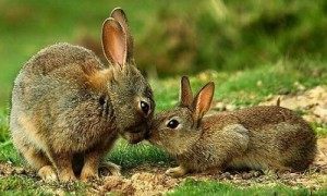 зайч и зайчонок
