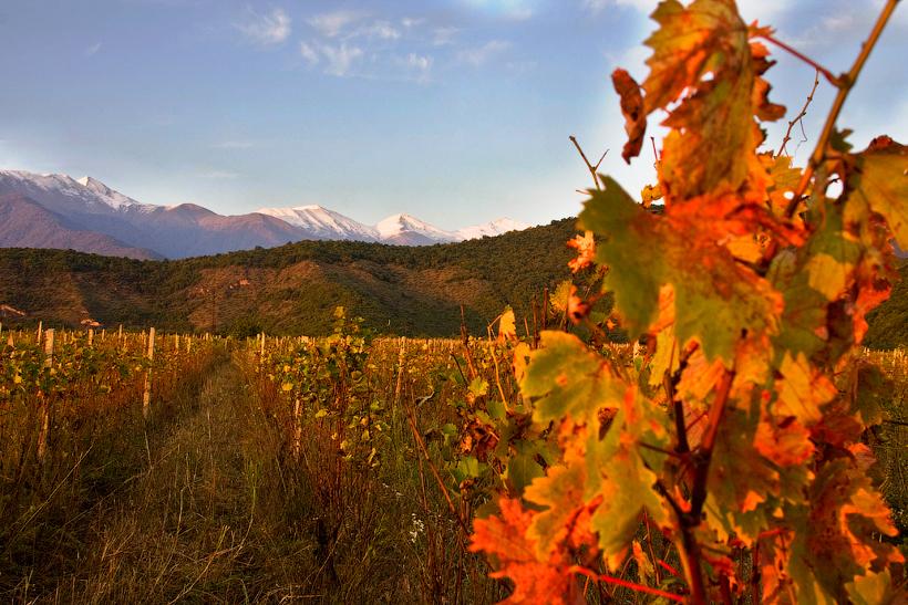 Кахетинские виноградники.