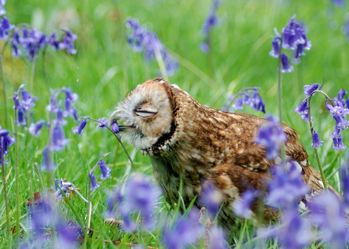 I-was-looking-through-my-friends-pictures-I-love-owls
