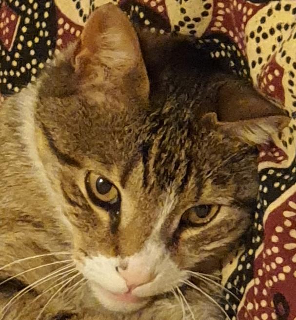 Мир чудес в своём окошке могут видеть только кошки!!! (Где-то в Израиле)