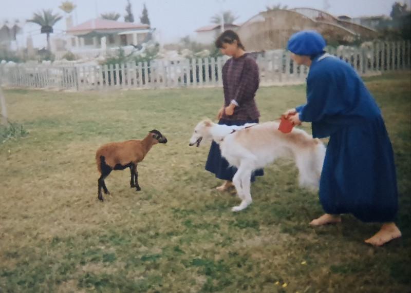 Ника знакомится с камерунской овечкой Став — Осень. Дочка её из бутылочки выкормила, и Став постоянно бегала за ней, как собачка.