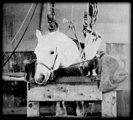 Лошади 8