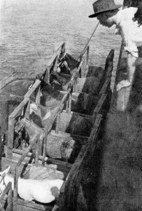 Лошади 1900 год