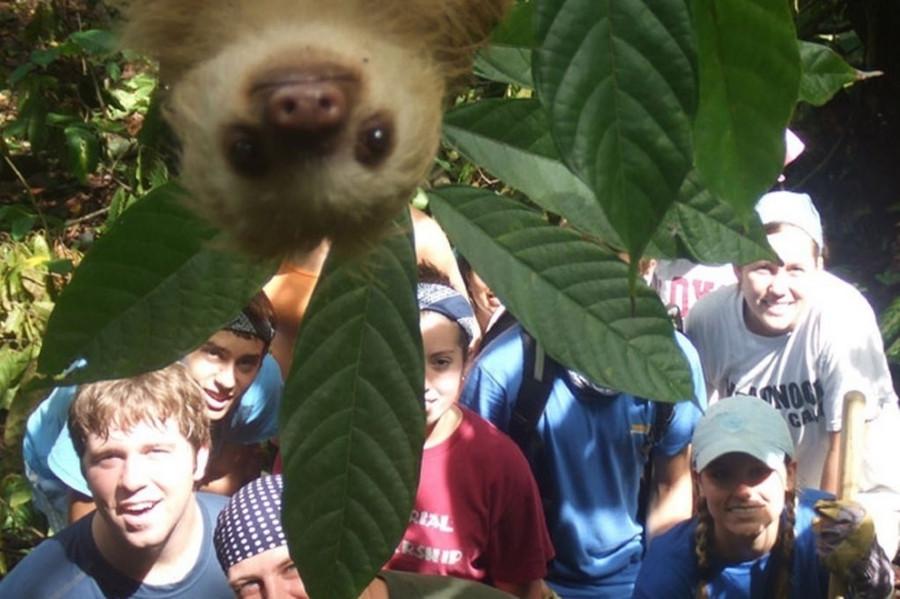 ленивец и группа студентов в Коста-Рике
