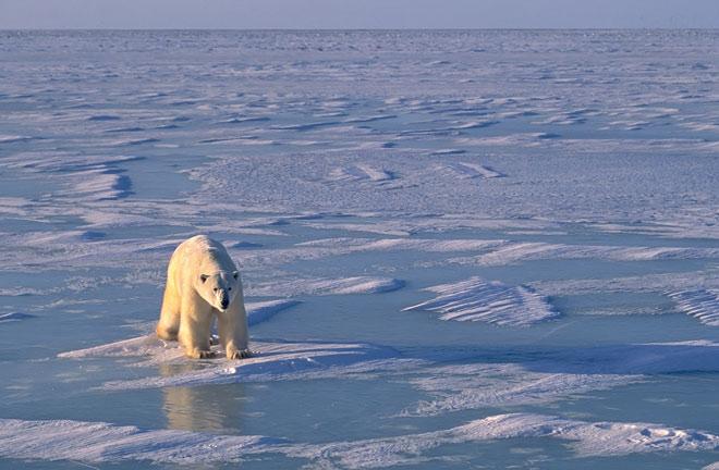Гисметео: арктические льды растают уже в ближайшее десятилетие.