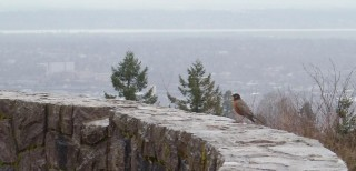 And, zooming in, a bird I hadn't noticed when snapping the picture.