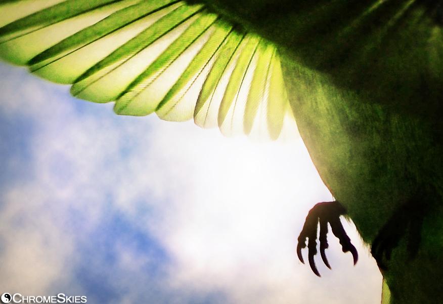 beneath_hummingbird_wing