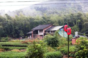Северо-западные склоны Тайму, окраина посёлка Байлинь. На фонаре почему-то написано не чай, а бухло