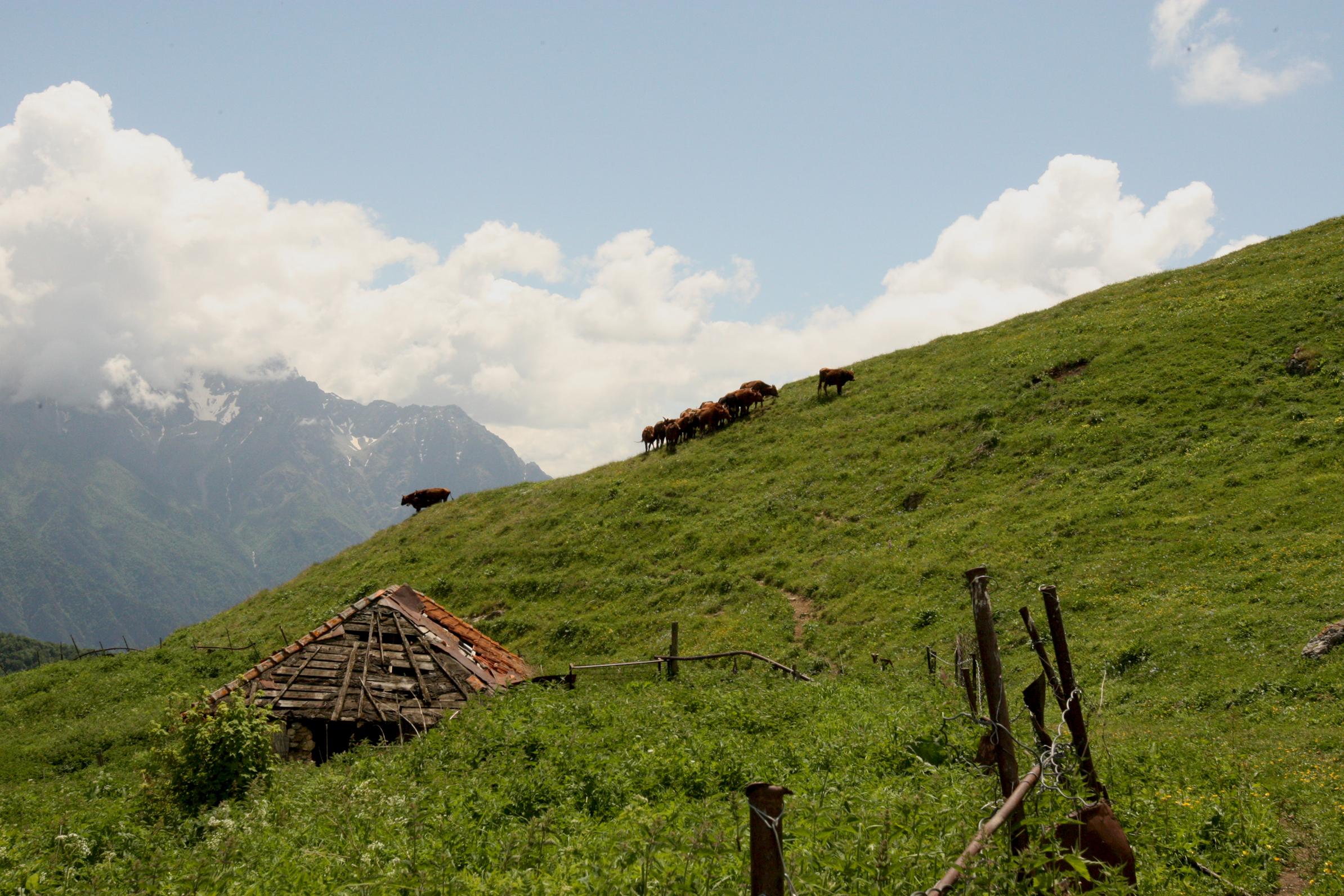 Фото сама села на большой бесплатно 17 фотография
