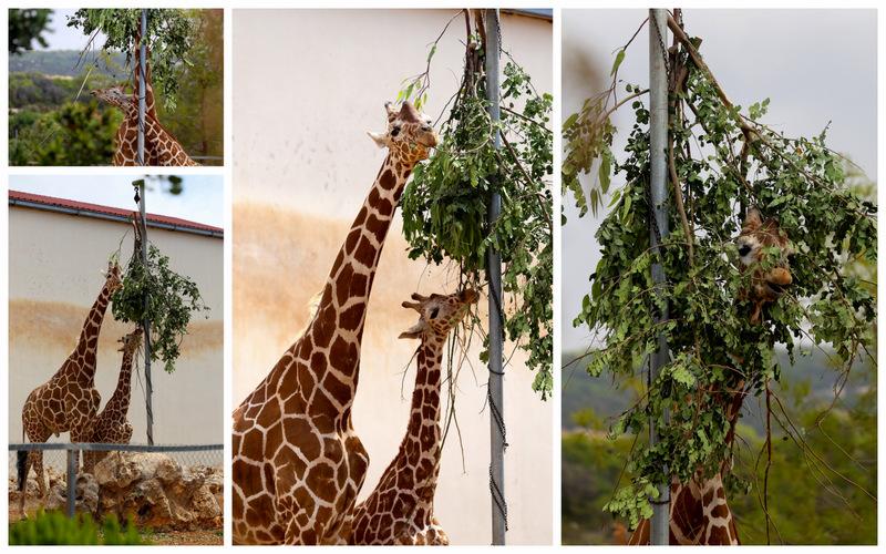 Пафос зоопарк7