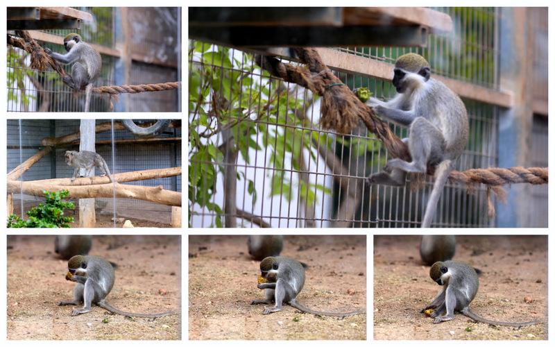 Пафос зоопарк8