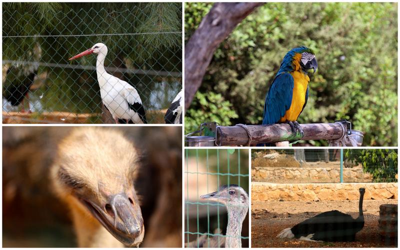Пафос зоопарк9