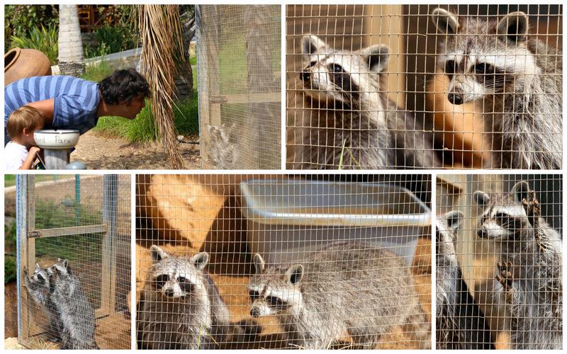 Пафос зоопарк11