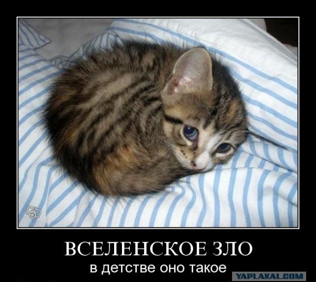 Коту пиздец демотиватор