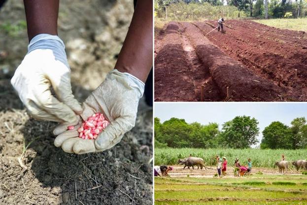 Фото из различных проектов общины бахаи (по часовой стрелке слева) в Колумбии, Уганде и Непале по укреплению местного сельского хозяйства.