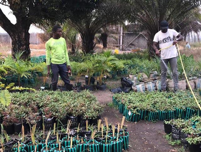 Волонтёры из местной общины, проживающие вокруг храма, помогают в выполнении различных задач, включая уход за питомником для растений, которые будут позже использоваться в садах.