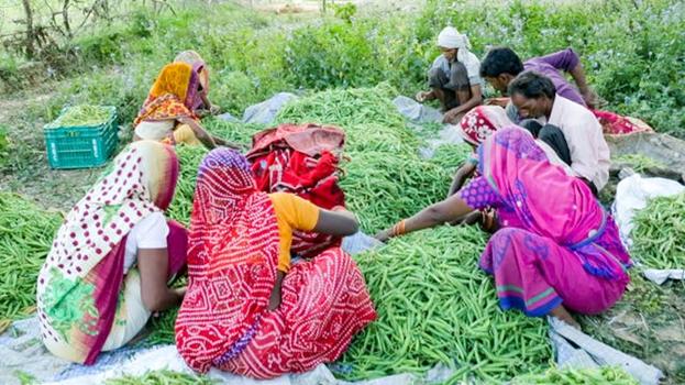 Фотография сделана до нынешнего глобального кризиса в области здравоохранения. Участники отметили, что основная проблема, вызванная политикой поощрения монокультурного земледелия, заключается в том, что фермеры, как правило, сосредотачиваются на товарных культурах, при этом исключая съедобные растения, которые могли бы служить источником питательных веществ и стать частью рациона местных жителей.